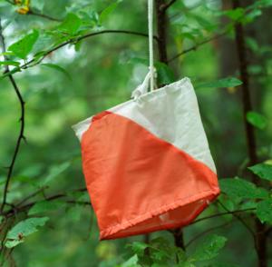 Orienteringspost i skogen